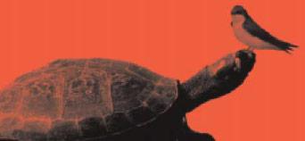 La rondine e la tartaruga