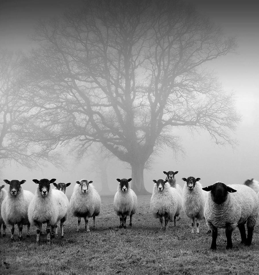 La silent hill delle pecore. (asini con l'iphone)